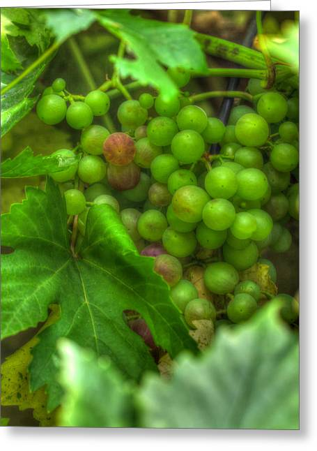 Blue Grapes Greeting Cards - Fruit Bearing Greeting Card by Heidi Smith