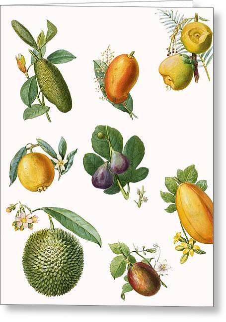 Exotic Fruit Greeting Cards - Fruit Greeting Card by English School
