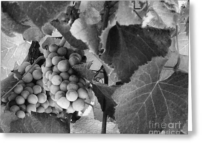 Fruit And Wine Greeting Cards - Fruit -Grapes in Black and White - Luther Fine Art Greeting Card by Luther Fine Art