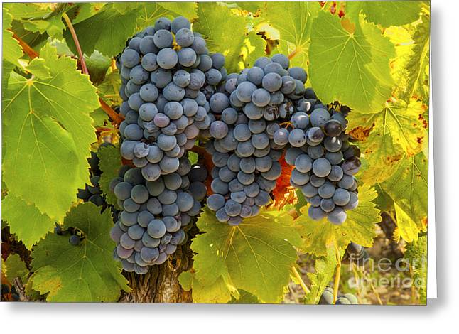 Table Wine Greeting Cards - Fruit of the Vine Imagine the Wine Greeting Card by Bob Phillips