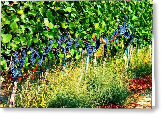 Wapato Photographs Greeting Cards - Fruit of the Vine Greeting Card by Kay Gilley