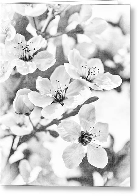 Plum Blossoms Greeting Cards - Fruit or Flower? Greeting Card by Caitlyn  Grasso