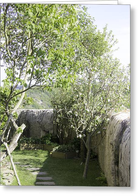 Strawberry Hill Greeting Cards - Fruit Trees at Marksburg Castle Greeting Card by Teresa Mucha
