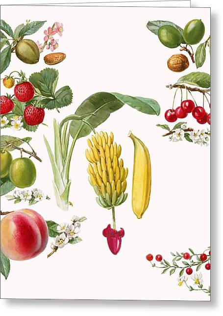 Peach Drawings Greeting Cards - Fruits Greeting Card by English School