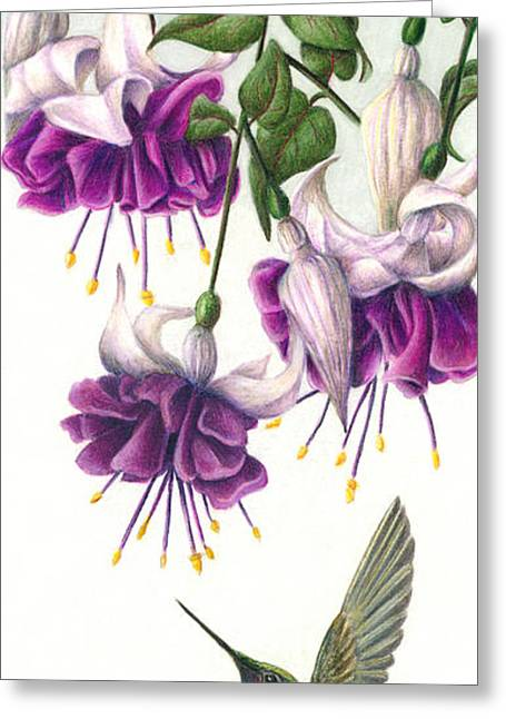 Humming Birds Greeting Cards - Fuchsia Beauty Greeting Card by Pat Erickson