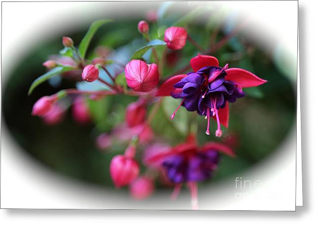 Hanging Baskets Greeting Cards - Fuchsia Cameo Greeting Card by Carol Groenen