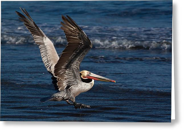 Exciting Surf Greeting Cards - Full Flap Takeoff Greeting Card by John Daly