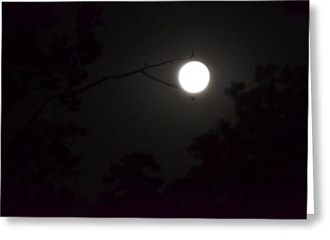Moon Greeting Cards - Full Moon Greeting Card by Kim Stafford