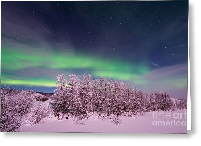Snowy Night Greeting Cards - Full Moon Lights Greeting Card by Priska Wettstein