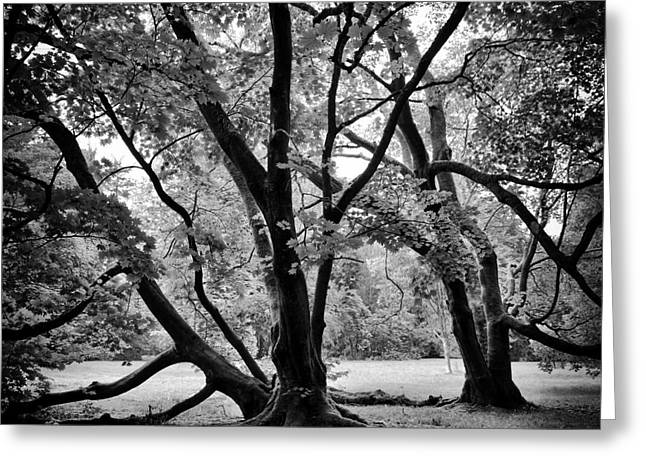 Full Moon Maple Trees  Greeting Card by Tim Gainey