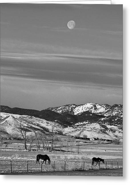 Two Horses Greeting Cards - Full Moon on the CO Front Range BW Greeting Card by James BO  Insogna