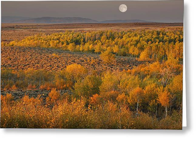 Steen Greeting Cards - Full Moon over the Steens Greeting Card by Christian Heeb