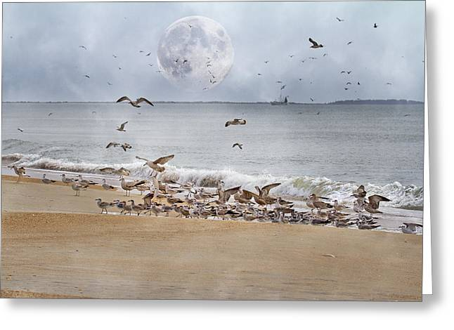 Flying Seagull Digital Art Greeting Cards - Full Moon Paradise Greeting Card by Betsy A  Cutler