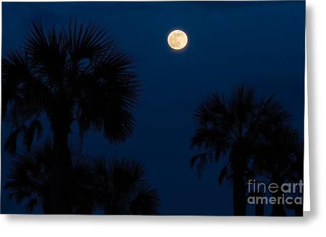 Beach At Night Greeting Cards - Full Moon Rising Over Palm Trees Greeting Card by Dawna  Moore Photography