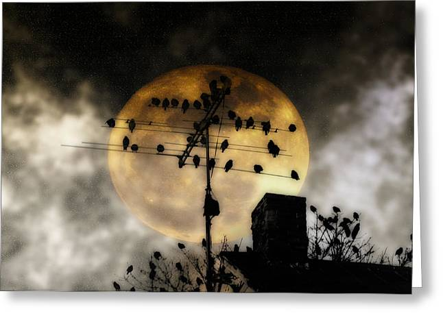 Luna Digital Art Greeting Cards - Full Moon Roost Greeting Card by Bill Cannon