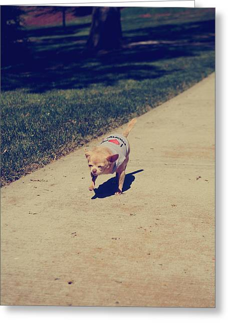 Dog Walking Greeting Cards - Full Speed Ahead Greeting Card by Laurie Search