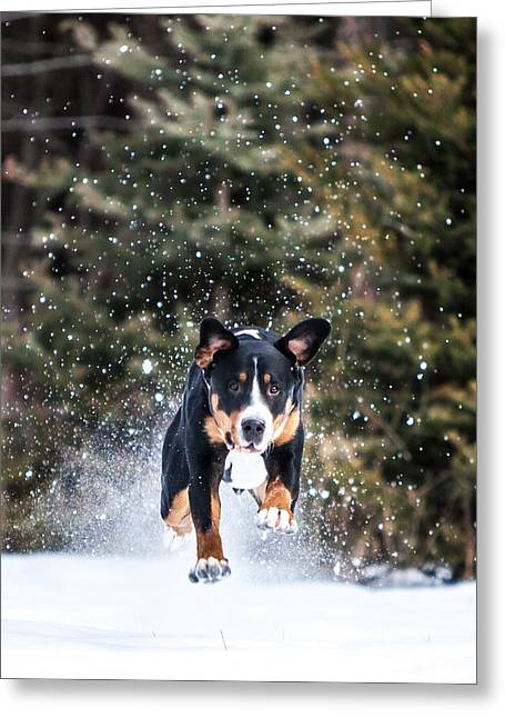 Swiss Photographs Greeting Cards - Full Steam Greeting Card by Aaron Aldrich