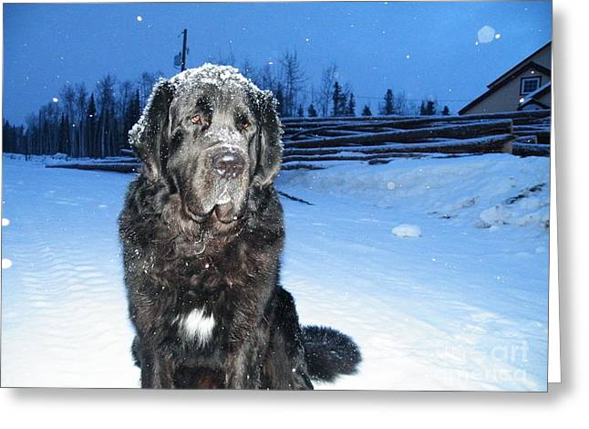 Fully Winterized  Greeting Card by Brian Boyle