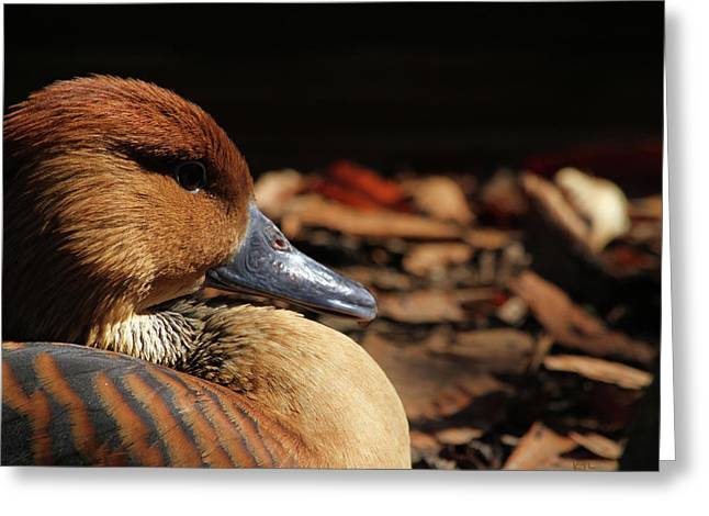 Karol Livote Greeting Cards - Fulvous Whistling Duck Greeting Card by Karol  Livote