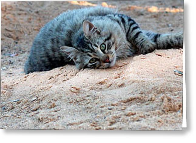 Kitten Prints Greeting Cards - Fun Cat Greeting Card by Bouquet  Of arts