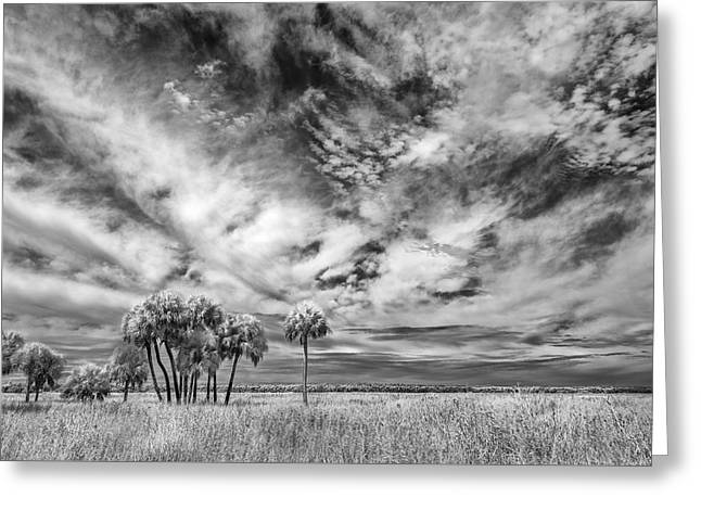Pond In Park Greeting Cards - Fun Sky Greeting Card by Jon Glaser