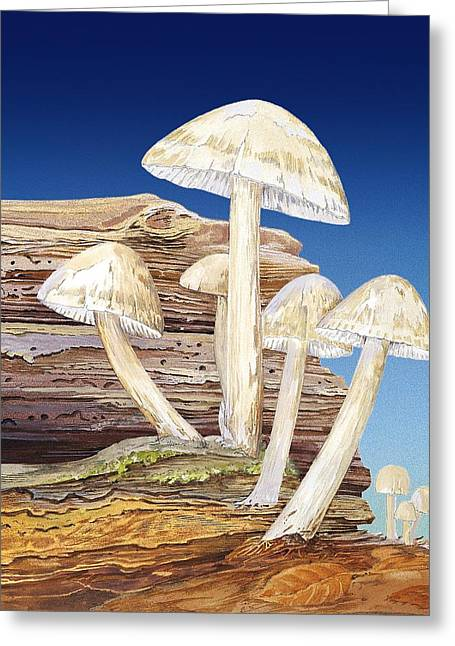 Fruiting Greeting Cards - Fungal fruiting bodies, artwork Greeting Card by Science Photo Library