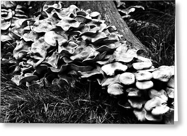 Fungi Photographs Greeting Cards - Fungi Greeting Card by Mark Rogan