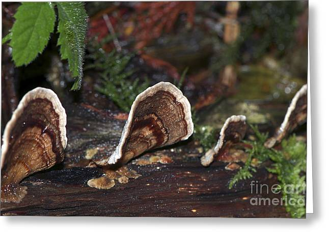 Forest Floor Greeting Cards - Fungi on a Log Greeting Card by Sharon  Talson
