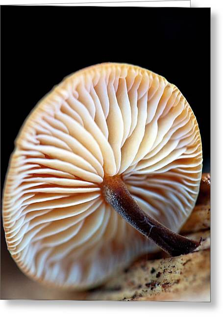Fungus Growing From Sawn Timber Greeting Card by Ian Gowland