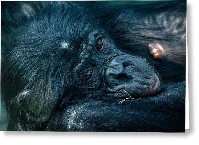 Humanlike Greeting Cards - Stare Greeting Card by Brian Stevens