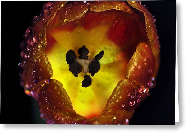 Petals With Droplets Greeting Cards - Furnace in a Tulip 2 Greeting Card by Kaye Menner
