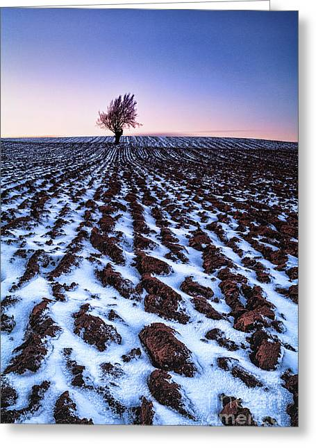 Fresh Snow Greeting Cards - Furows in the snow Greeting Card by John Farnan