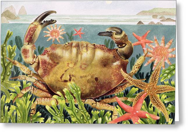 Exploring Paintings Greeting Cards - Furrowed Crab with Starfish Underwater Greeting Card by EB Watts