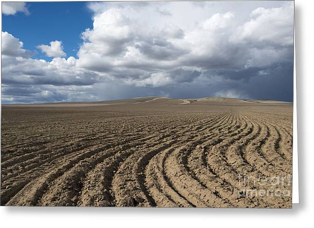 Plowed Fields Greeting Cards - Furrows before the Storm Greeting Card by Mike  Dawson