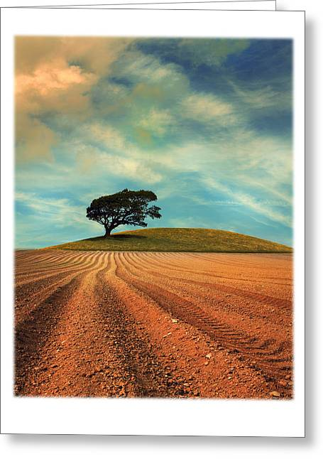 Tree Greeting Cards - Furrows Greeting Card by Mal Bray