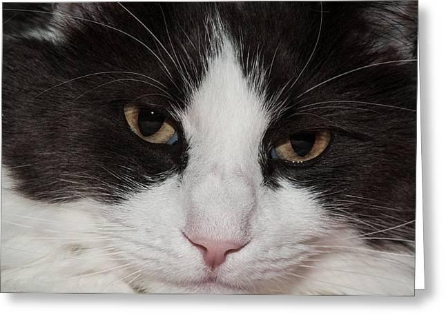 Pink Nose Greeting Cards - Furry Face Greeting Card by Lara Ellis