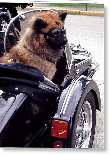 Dog In Lake Greeting Cards - Furry Sidecar Rider  Greeting Card by Jane Butera Borgardt