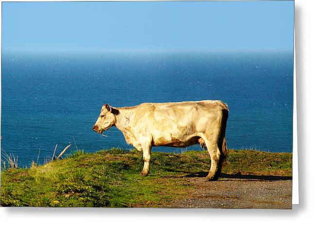 Coast Highway One Greeting Cards - Furthest West a cow can go. Greeting Card by Stan Angel