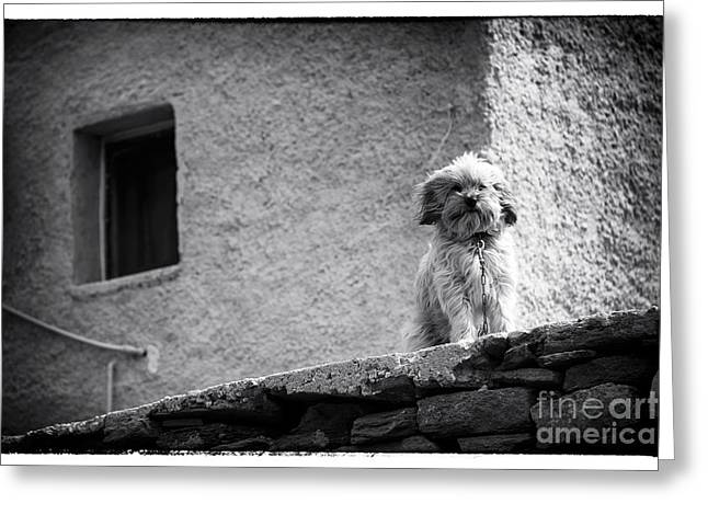 Stone House Greeting Cards - Fury Friend at Delos Greeting Card by John Rizzuto