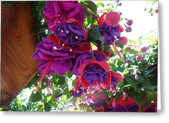 Fushia Greeting Cards - Isabel Greeting Card by Mary Gonzales Brhel