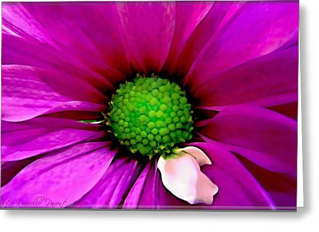Fushia Greeting Cards - Fushia Daisy  Greeting Card by Danielle  Parent