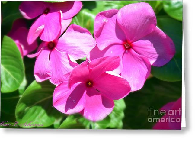Fushia Greeting Cards - Fushia Floral Greeting Card by Shar Schermer