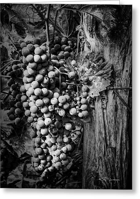 Silver Hills Winery Greeting Cards - Future Wine Greeting Card by Jeff Swanson