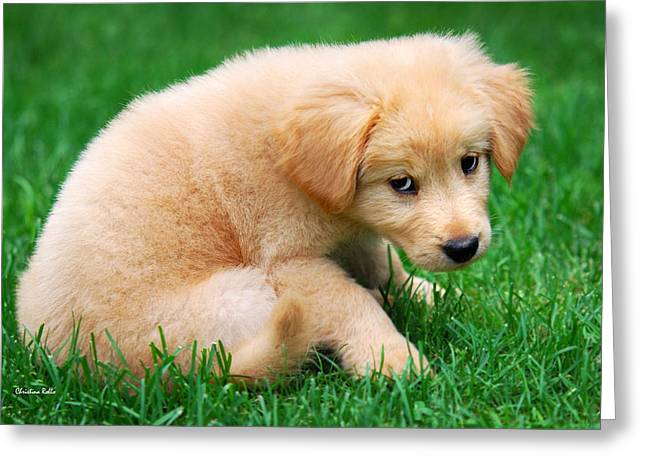 Dog Photographs Greeting Cards - Fuzzy Golden Puppy Greeting Card by Christina Rollo