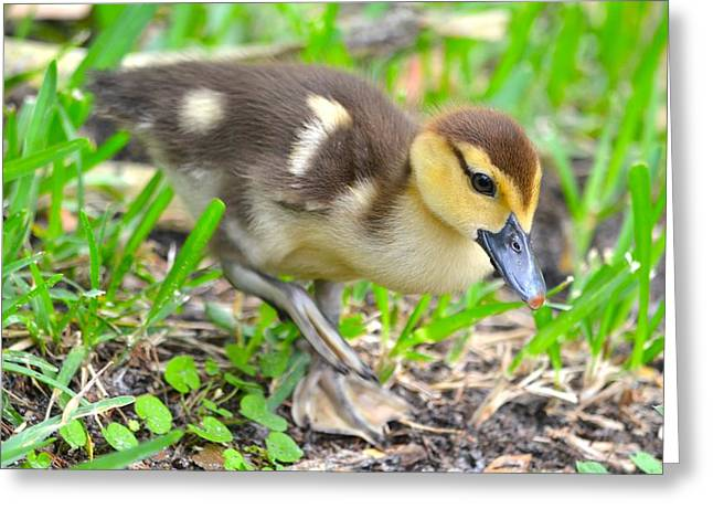 Jacksonville Greeting Cards - Fuzzy Little Duckling Greeting Card by Richard Bryce and Family