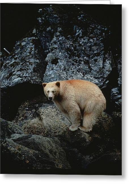 Concern Greeting Cards - Fv3608, Jason Puddifoot White Spirit Greeting Card by Jason Puddifoot
