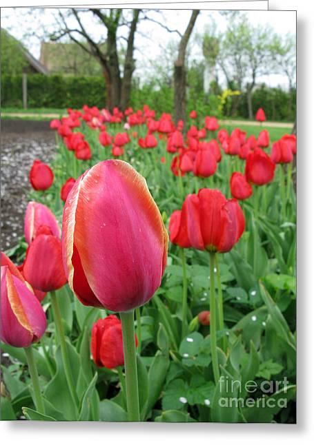Tulip Tree Digital Art Greeting Cards - Gaden With Tulips Greeting Card by Ausra Paulauskaite