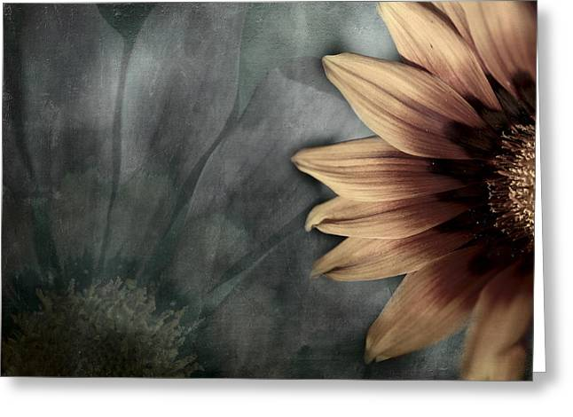 Photo Montage Greeting Cards - Gaillardia Greeting Card by Bonnie Bruno