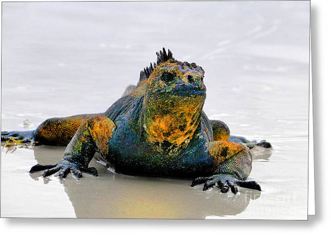 Island Imagination Greeting Cards - Galapagos Evolution Personified Greeting Card by Al Bourassa
