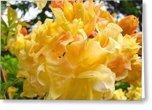 Rhodies Greeting Cards - Gallery Fine Art Prints Yellow Orange Rhodies Greeting Card by Baslee Troutman